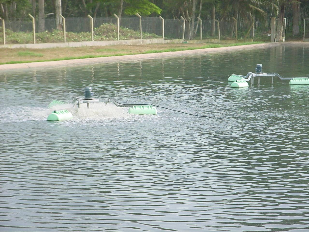 SAPH BONGO 02-2008  (6)